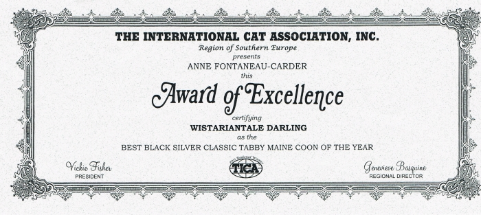 Darling Maine Coon Best TICA Black Silver 2011